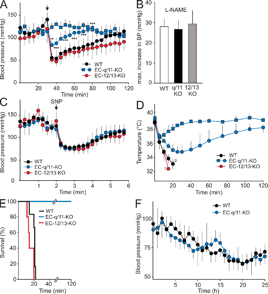 Figure 4. Role of endothelial G q /G 11 and G 12 /G 13 in the systemic effects of histamine, PAF, and LPS. (A) Arterial blood pressure was monitored telemetrically in mice before and after i.v. injection of carrier solution (squares) or 10 mg/kg histamine (circles). Shown are mean values of fi ve to seven animals per genotype ± SD. *, P < 0.05; **, P < 0.01; ***, P < 0.001 (compared with WT). The arrow indicates the time point of injection. (B) Arterial blood pressure was monitored telemetrically in anesthesized mice ( n ≥ 5 per genotype) before and after i.v. injection of 50 mg/kg L- NAME. Shown is the maximal blood pressure change, in millimeters of mercury, after injection of the NOS inhibitor. Values are the means ± S.D. (C) Arterial blood pressure was