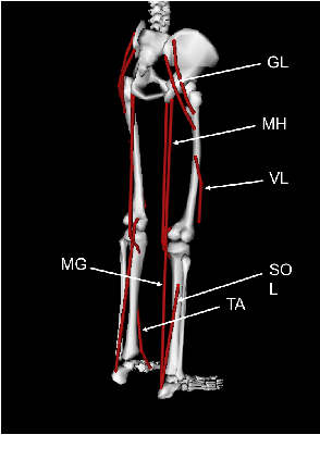 Figure 3 for Quantifying Performance of Bipedal Standing with Multi-channel EMG