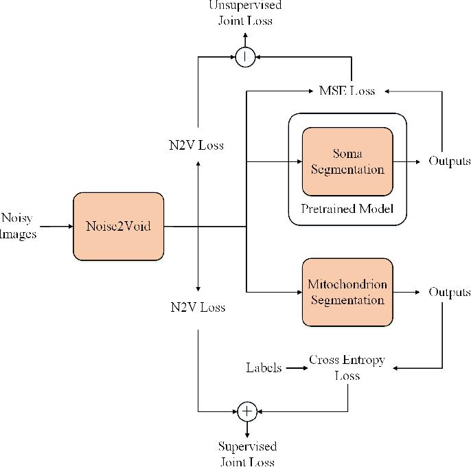Figure 1 for Joint Optical Neuroimaging Denoising with Semantic Tasks