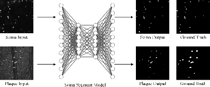 Figure 3 for Joint Optical Neuroimaging Denoising with Semantic Tasks