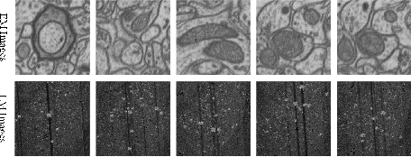 Figure 4 for Joint Optical Neuroimaging Denoising with Semantic Tasks