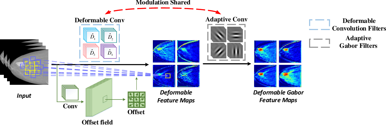 Figure 1 for Deformable Gabor Feature Networks for Biomedical Image Classification
