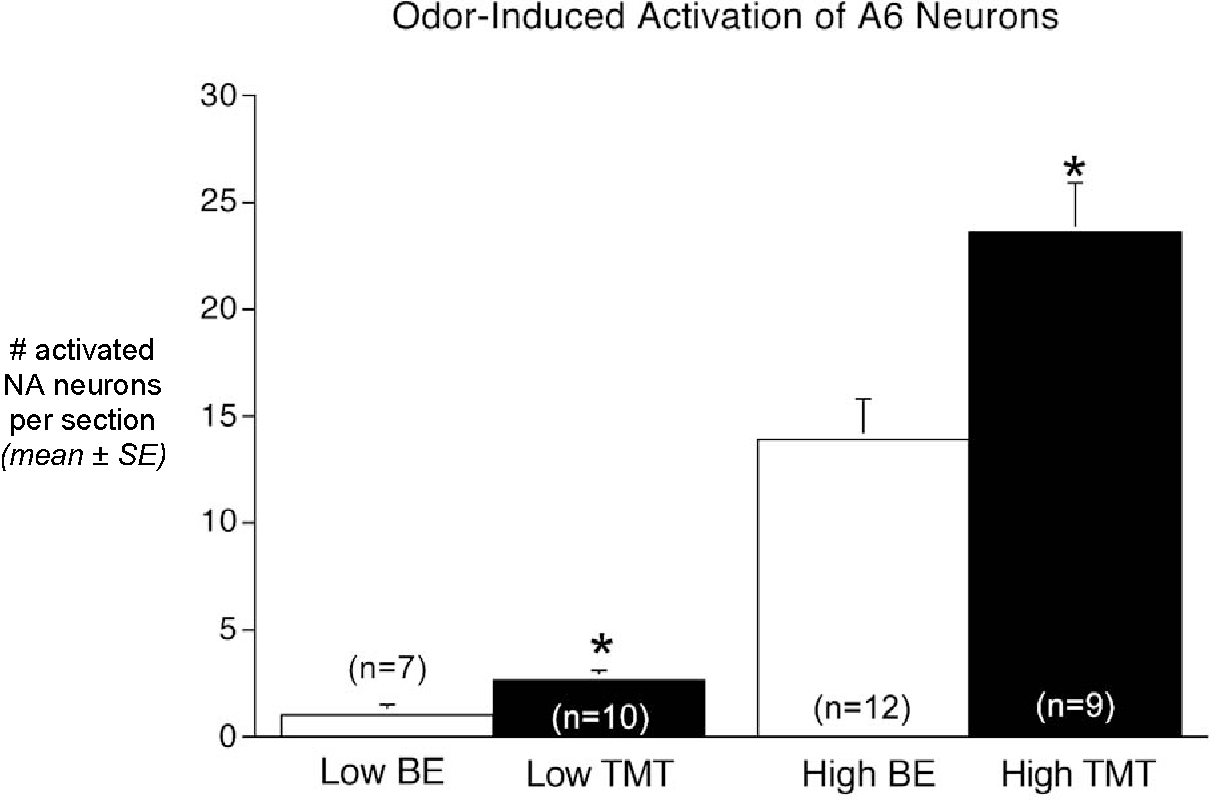 Figure 3. Odor-induced activation of cFos in DbH-immunopositive neurons within the pontine LC (A6 cell group). TMT activated significantly more NA neurons compared to BE (* P < 0.05) at each odor intensity level. Group sizes are indicated.