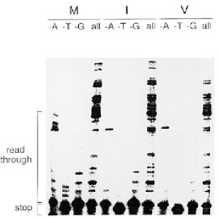 Figure 2. Nucleotide misincorporation assay on an HIV-2 RNA template with the lys21-primer. The virion-extracted RT enzymes 184Met, 184Ile and 184Val were used, as indicated above the lanes. The DNA primer was extended in the absence of one of the dNTPs (the missing dNTP is indicated above the lanes; e.g., –A is –dATP). The four dNTPs were added in the lanes marked 'all', resulting in the synthesis of extended cDNA forms. cDNAs of intermediary length represent pausing products.