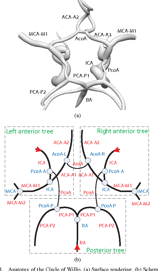 Anatomical Labeling Of The Circle Of Willis Using Maximum A