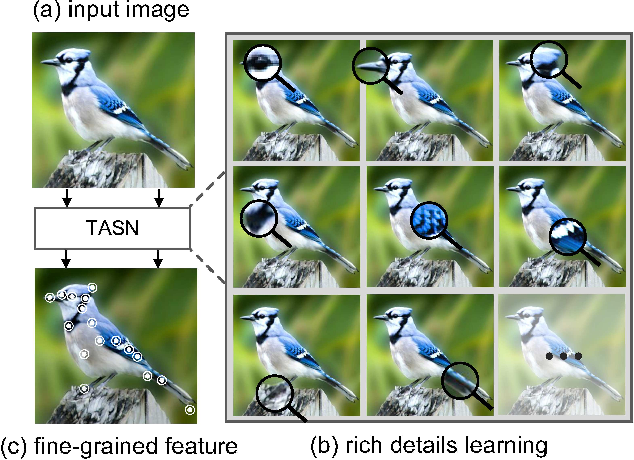 Figure 1 for Looking for the Devil in the Details: Learning Trilinear Attention Sampling Network for Fine-grained Image Recognition