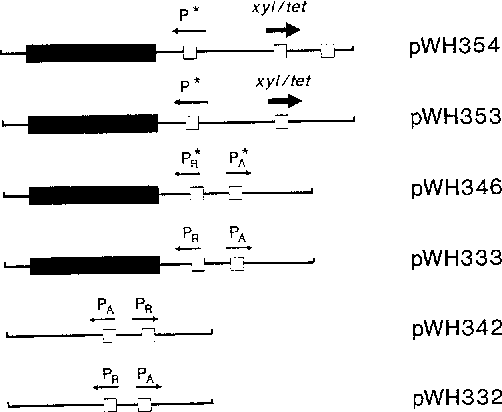 Fig. 1. Schematic presentation of the regulatory elements used to construct expression vectors. The drawings on the left side indicate the tet operators (open boxes), the tet promoters (PA and PR) with their direction of transcription (thin arrows), the xyl/tet fusion promoters (direction of transcription indicated by heavy arrows), and the tetR genes (black boxes). The designations of the respective plasmids are given on the right side of the figure. The orientation of the insertions in these plasmids is such that the cat indicator gene is located on the right of the drawings. P~ and ~ denote the improved mutant tet promoters shown in Fig. 2 and P* denotes the further improved PR promoter