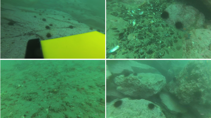 Figure 1 for UDD: An Underwater Open-sea Farm Object Detection Dataset for Underwater Robot Picking