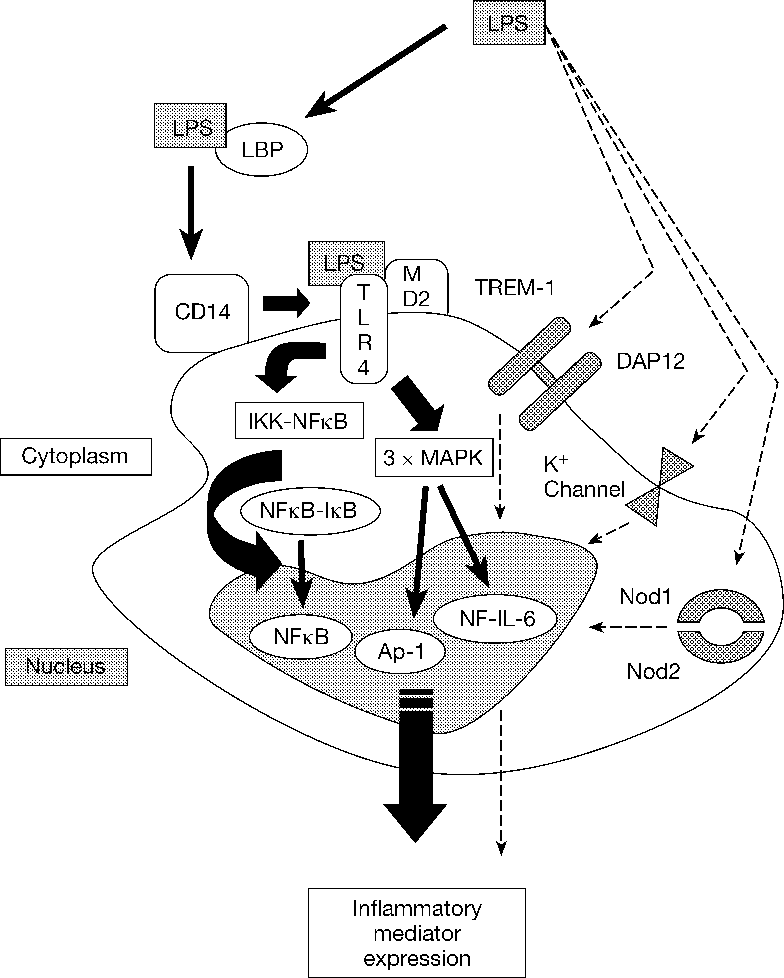 Oxidative Stress And Gene Expression In Sepsis