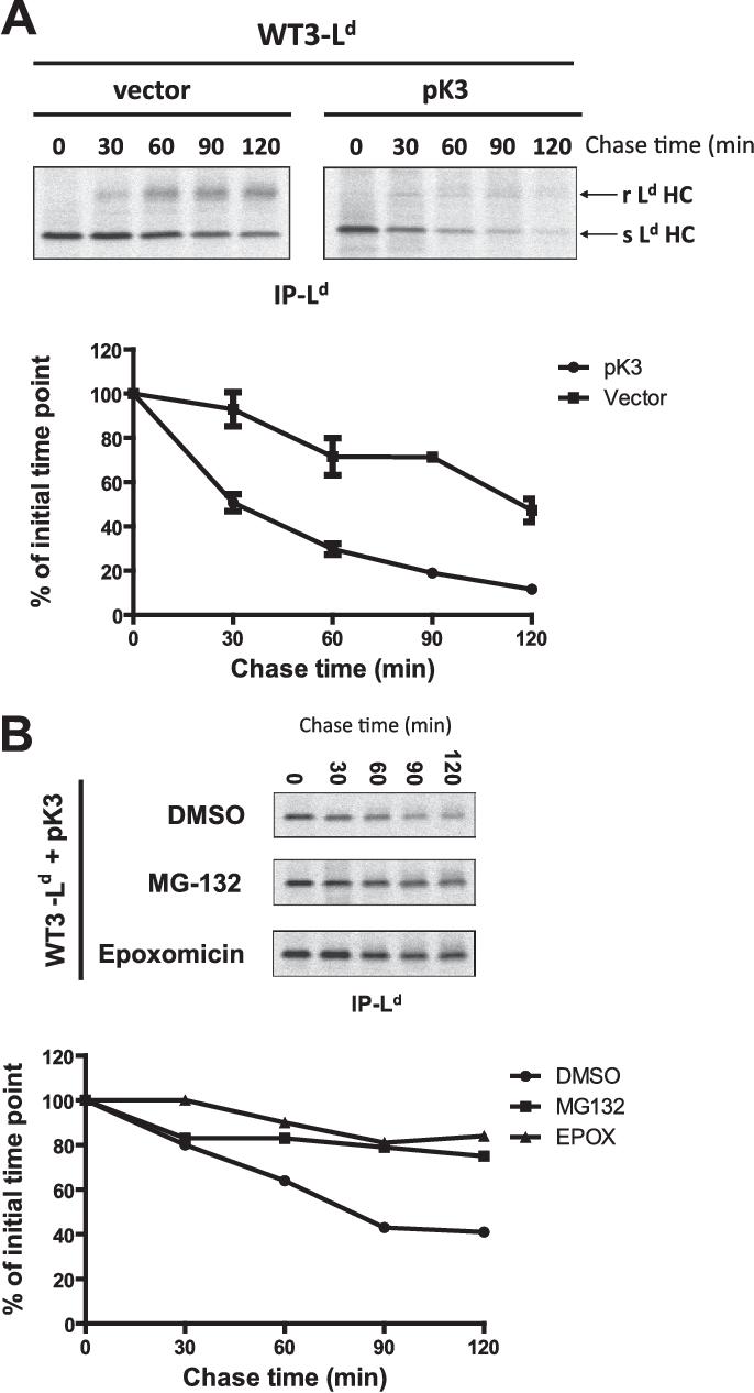 Newly discovered viral E3 ligase pK3 induces endoplasmic
