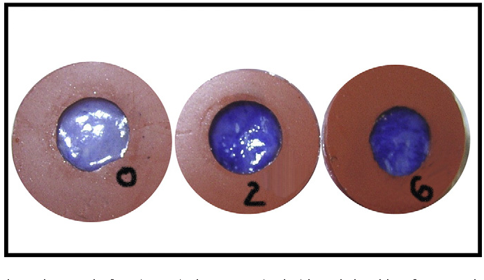 Figure 3 from Use of porcine vaginal tissue ex-vivo to model
