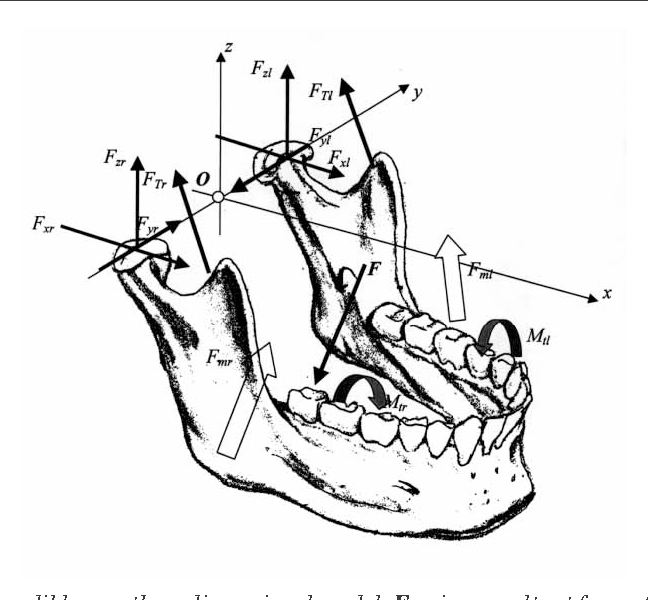 Figure 1 From Three Dimensional Model Of The Human Mandible