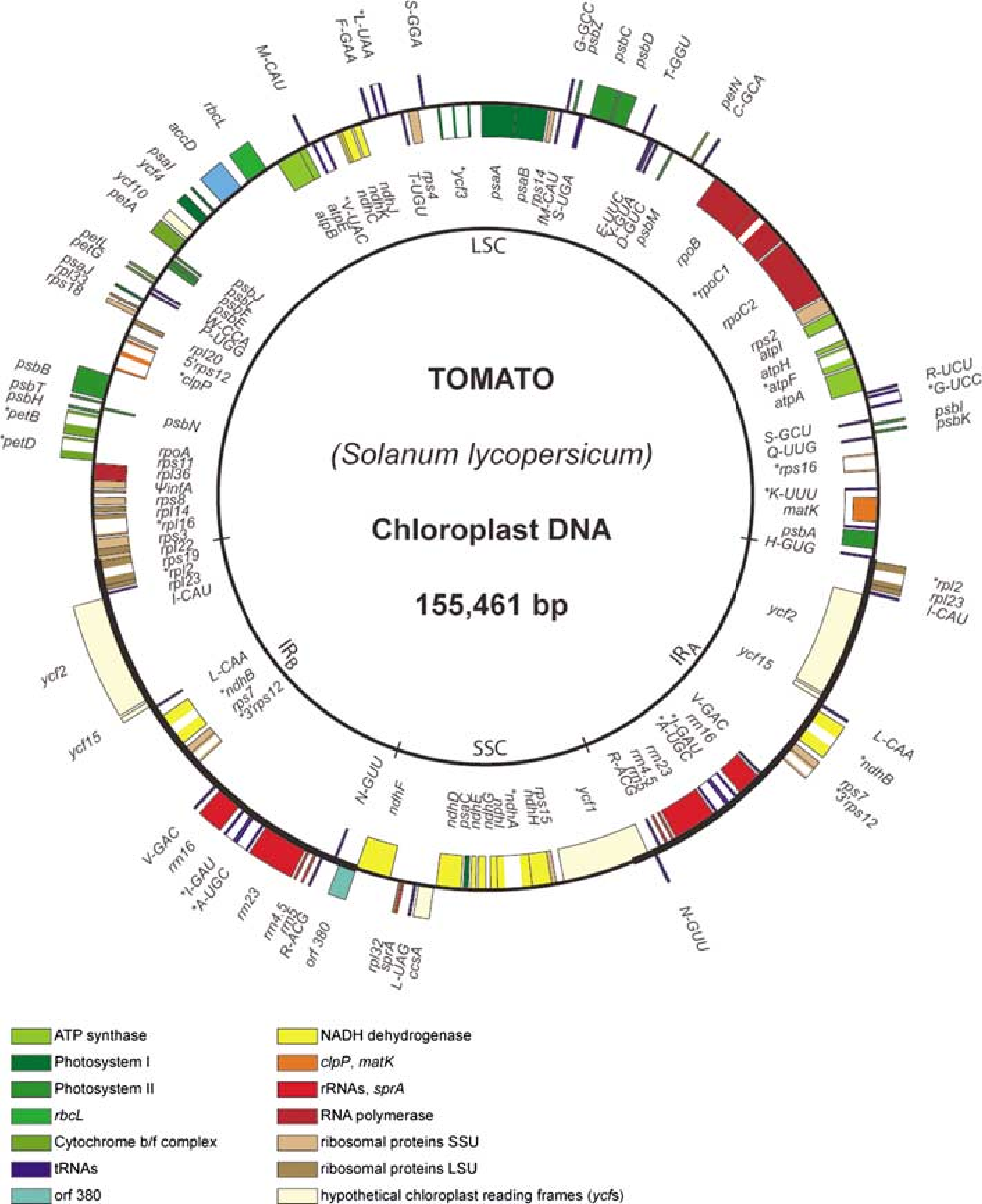 Sequence of the tomato chloroplast dna and evolutionary comparison figure 1 ccuart Gallery