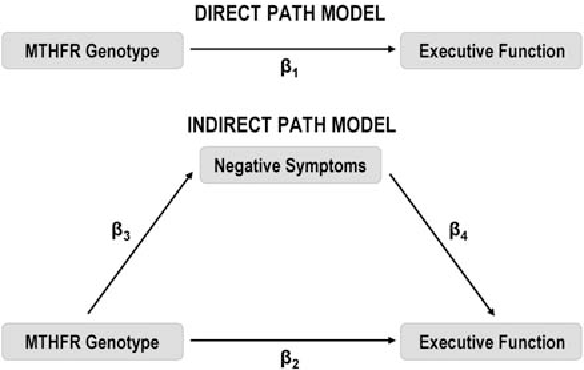 Effects of the methylenetetrahydrofolate reductase (MTHFR