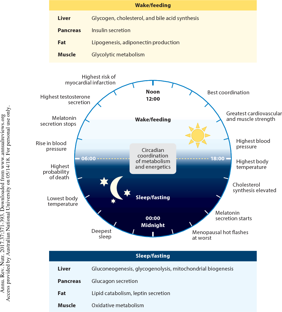 Figure 2 from Metabolic Effects of Intermittent Fasting  - Semantic