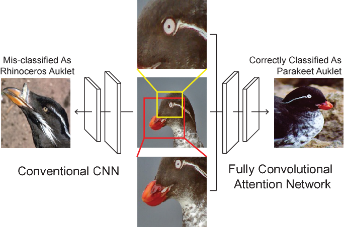 Figure 1 for Fully Convolutional Attention Networks for Fine-Grained Recognition