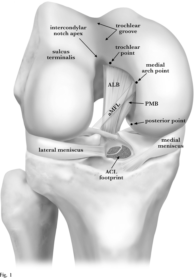 Arthroscopically pertinent anatomy of the anterolateral and ...