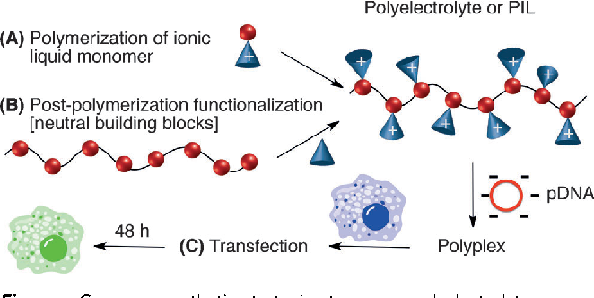 Figure 1. Common synthetic strategies to access polyelectrolytes through a) polymerization of ionic liquids that contain a polymerizable unit; and b) modification of the polymer backbone with a neutral group that yields charged moieties or by directly using a charged functional group to couple to the backbone. c) PIL/pDNA polyplexes transfect cells and induce luciferase expression, resulting in cell luminescence.