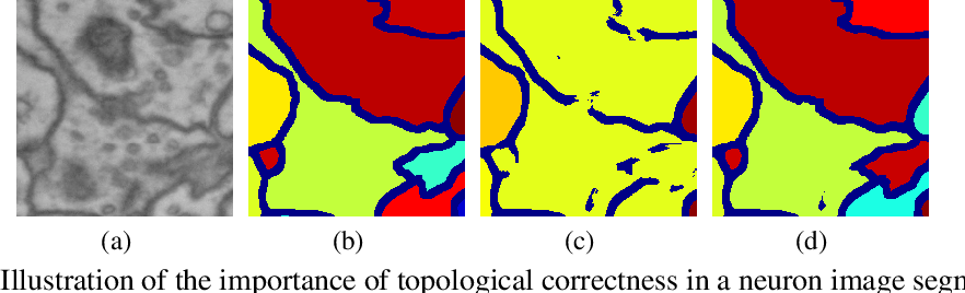 Figure 1 for Topology-Preserving Deep Image Segmentation
