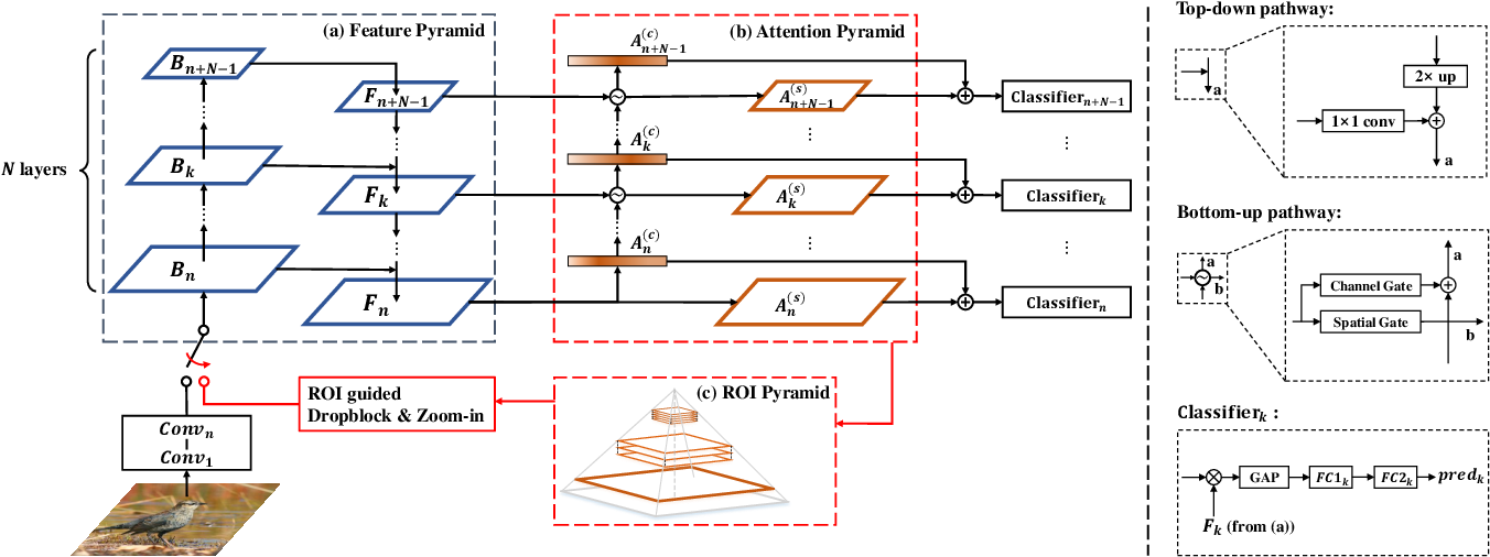 Figure 3 for Weakly Supervised Attention Pyramid Convolutional Neural Network for Fine-Grained Visual Classification