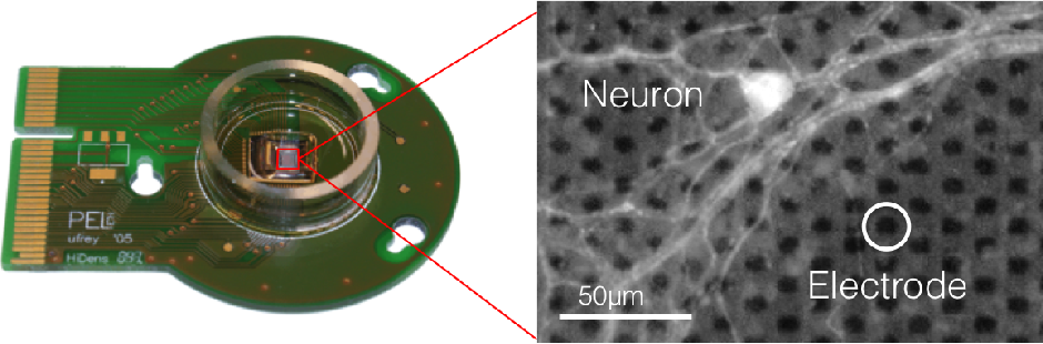 Figure 1 for Neural Autopoiesis: Organizing Self-Boundary by Stimulus Avoidance in Biological and Artificial Neural Networks