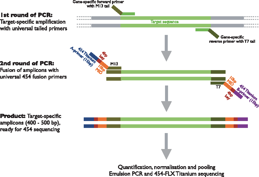 A tailed PCR procedure for cost-effective, two-order