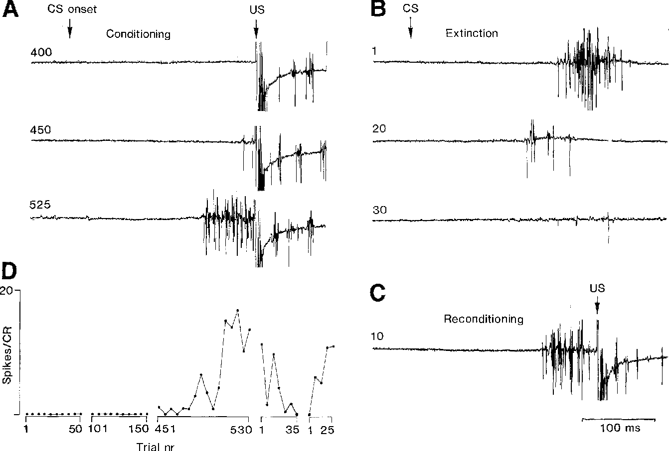 Inhibition of the inferior olive during conditioned responses in the ...