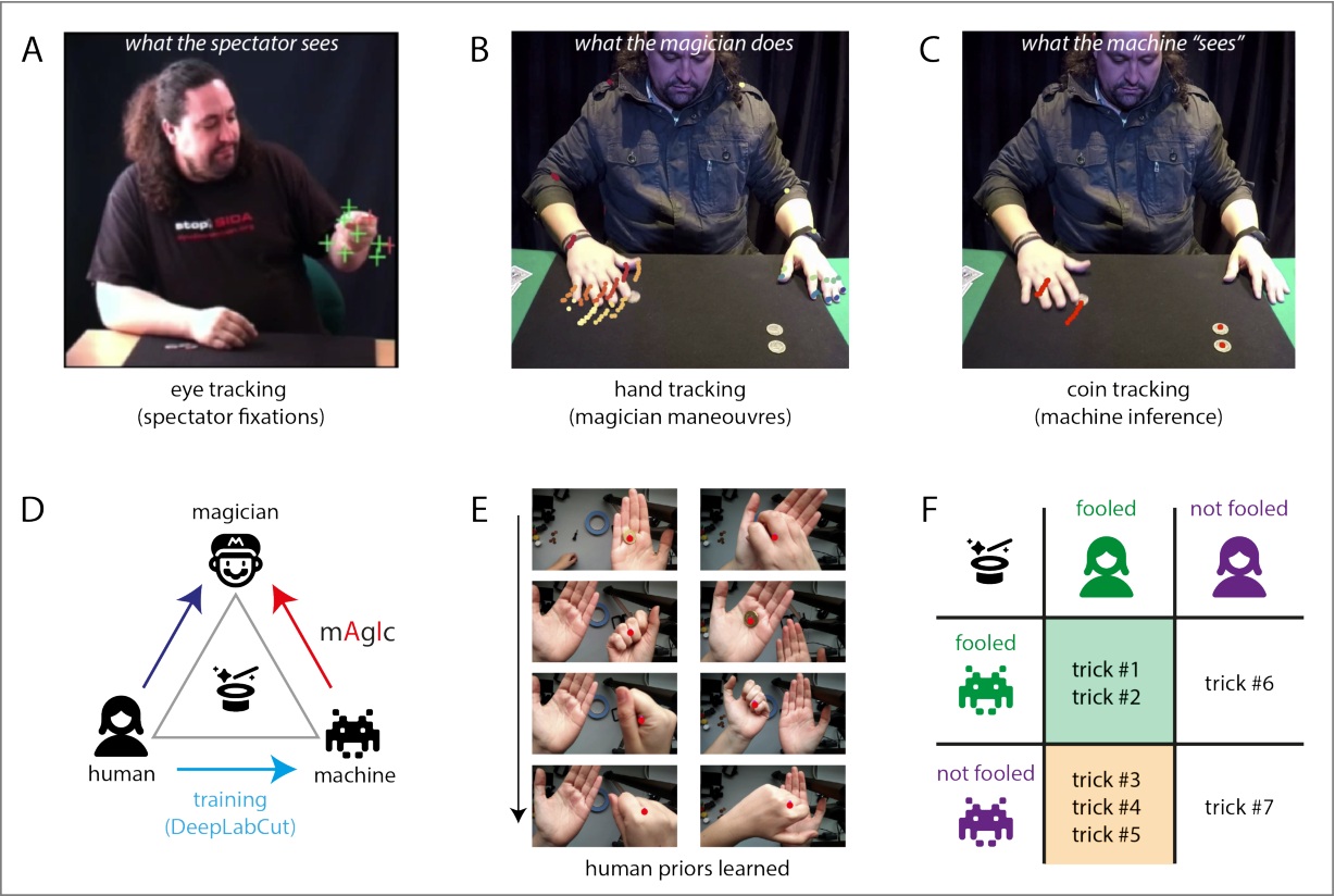 Figure 1 for Playing magic tricks to deep neural networks untangles human deception