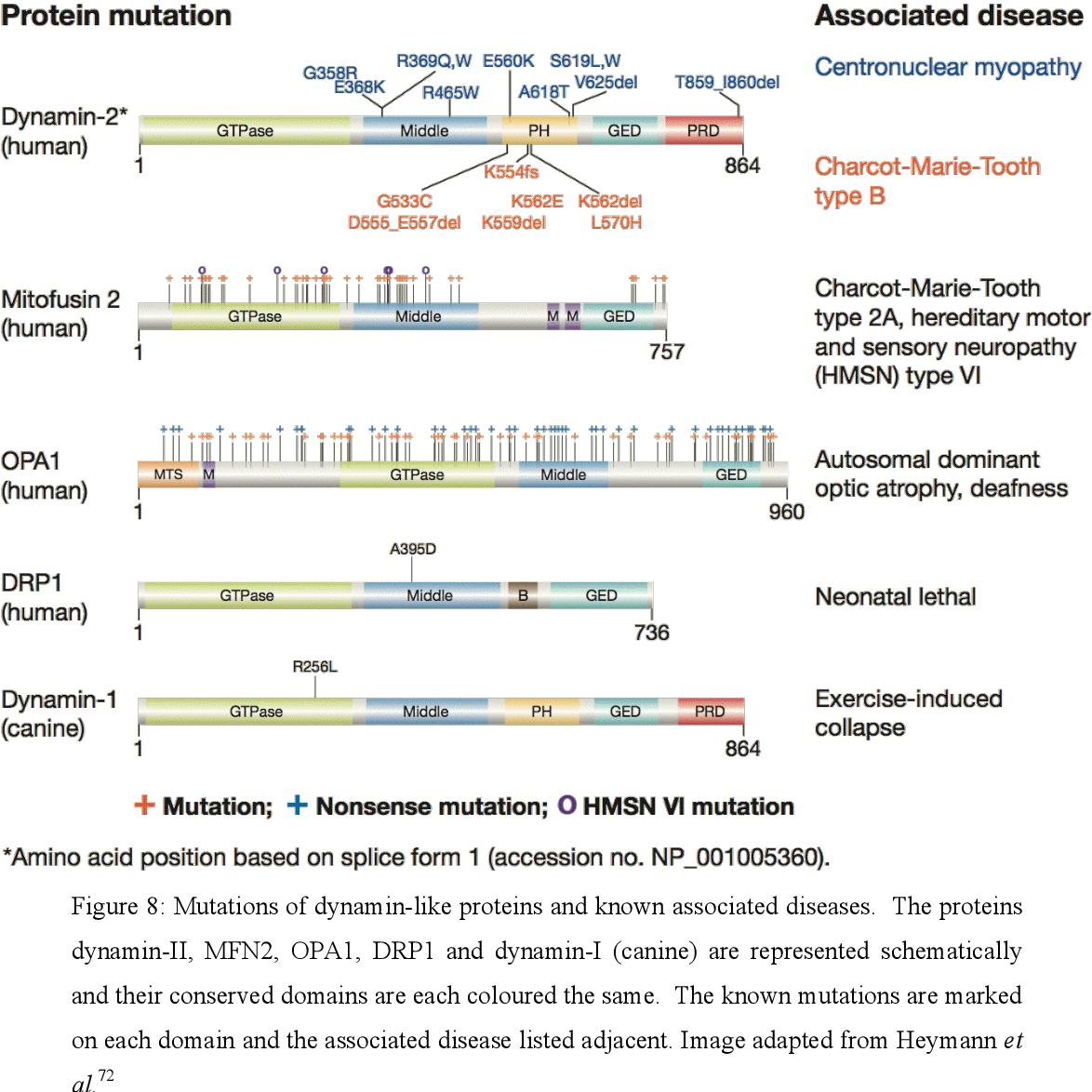 PDF] 1  Dynamin-I inhibitors from sessile marine