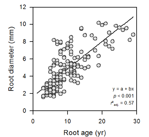 Influence Of Root Diameter And Soil Depth On The Xylem Anatomy Of