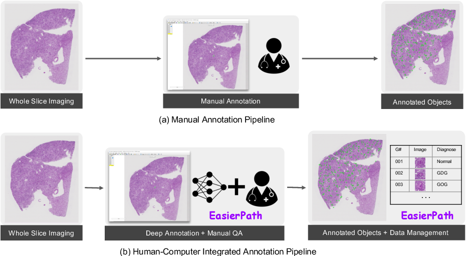 Figure 1 for EasierPath: An Open-source Tool for Human-in-the-loop Deep Learning of Renal Pathology