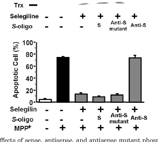 Fig. 3. Effects of sense, antisense, and antisense mutant phosphothionate oligonucleotides of human Trx on the expression of Trx and the suppression of MPP -induced apoptosis produced by selegiline. SH-SY5Y cells were transfected with S-oligonucleotide probes against human Trx mRNA, including sense (S), antisense (Anti-S), and antisense mutant (Anti-S mutant) probes before the exposure of these human neurotrophic cells to MPP neurotoxin (1 mM for 24 h). Selegiline (1 M for 24 h) was applied immediately before MPP in some experimental groups to induce Trx and to inhibit MPP -induced apoptosis. Cells were harvested and analyzed for the expression of endogenous Trx using Western blotting analysis (top) and apoptosis (n 6).