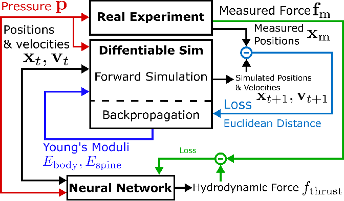 Figure 2 for Learning Material Parameters and Hydrodynamics of Soft Robotic Fish via Differentiable Simulation