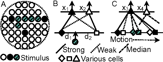 Figure 1 for A Unified Quantitative Model of Vision and Audition