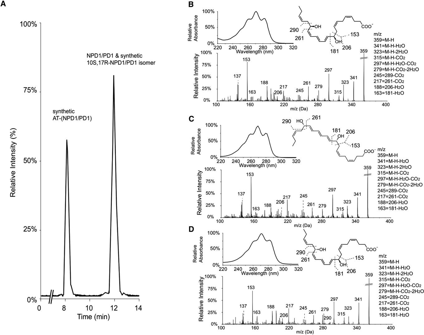 Figure 3. LC-MS-MS Lipidomics and Properties of Synthetic AT-(NPD1/PD1), NPD1/PD1, and Their Isomers (A) MRM chromatogram (m/z 359 > 153) of coinjection of synthetic AT-(NPD1/PD1), 10S,17R-AT-(NPD1/PD1) isomer, and NPD1/PD1 is shown. AT-(NPD1/PD1) and NPD1/PD1 separate in this LC system, with retention times of 8.2 and 12.0 min. (B–D) Representative tandem mass and UV spectra of synthetic AT-(NPD1/PD1) (B), D15-trans-NPD1/PD1 (C), and NPD1/PD1 (D) are shown.