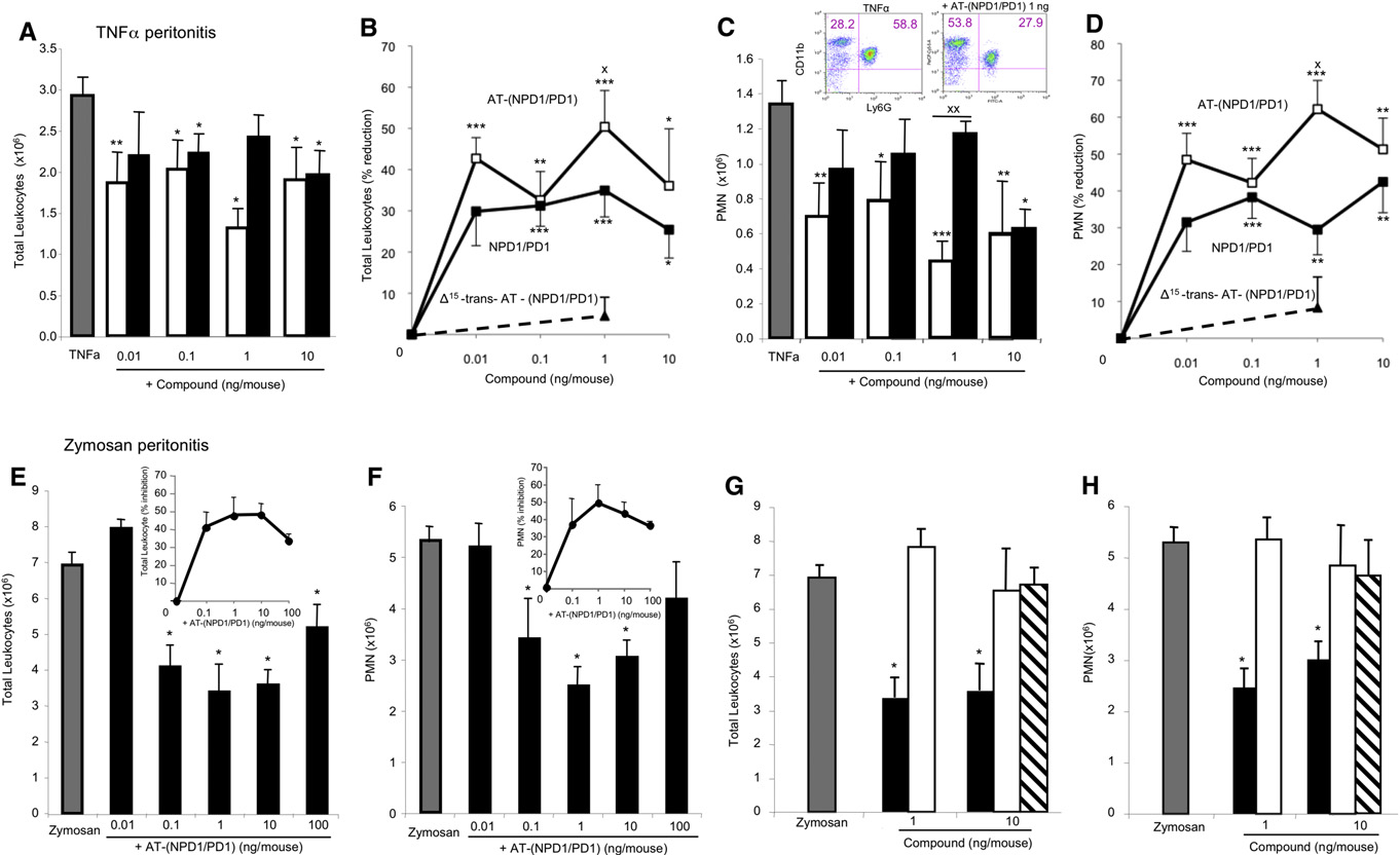 Figure 5. AT-(NPD1/PD1) Reduces Leukocyte Infiltration in Peritonitis: Direct Comparison to NPD1/PD1 (A–D) Peritonitis was initiated by peritoneal injection of 500 ng of TNF-a alone, TNF-a plus synthetic AT-(NPD1/PD1) (0.01–10.0 ng), or NPD1/PD1 (0.01–10 ng). Peritoneal lavages were obtained at 4 hr and leukocytes were enumerated (see Experimental Procedures). Shown are total leukocyte numbers (A), doseresponse: percentage reduction of total leukocytes (B), total PMN numbers (C), and dose-response: percentage reduction of PMN infiltration (D). Representative flow cytometry dot plots are shown (C, inset). TNF-a, gray bars; AT-(NPD1/PD1), black bars; NPD1/PD1, white bars. Values are mean ± SEM of n = 7. (E–H) AT-(NPD1/PD1) dose response and direct comparison to DHA. Zymosan A alone (100 mg/mouse), zymosan A plus AT-(NPD1/PD1) (0.01–100 ng/mouse), or zymosan A plus DHA (1 and 10 ng/mouse) were injected (i.p.) and lavages were obtained at 4 hr. Total exudate leukocyte (PMN, monocyte, lymphocyte) numbers (E and G), and total PMN (F and H) are shown. Insets in (E) and (F) show percentage reduction in total leukocytes and PMN. Zymosan A, gray bars; AT-(NPD1/ PD1), black bars; DHA, white bars; D15-trans-AT-(NPD1/PD1), striped bars. All values are mean ± SEM of n = 3. *p < 0.05, **p < 0.01, ***p < 0.001 versus vehicle; Xp < 0.05, XXp < 0.01 AT-(NPD1/PD1) versus NPD1/PD1. Using one-way and two-way ANOVA indicated that AT-NPD1 and NPD1/PD1 were not significantly different from each other (p > 0.05).