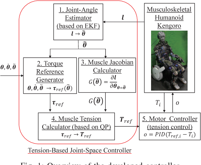 A joint-space controller based on redundant muscle tension