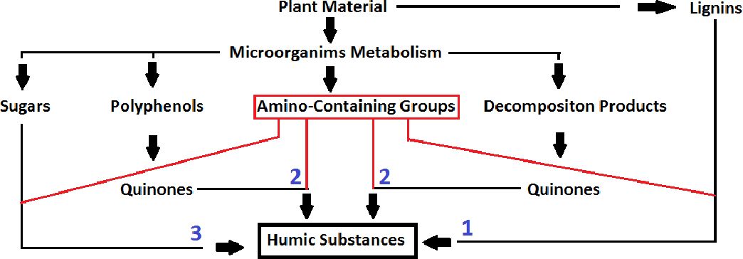 Figure 2: Pathways of humic acid formation.