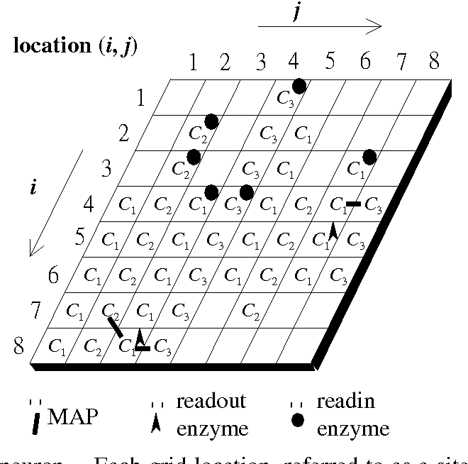 Fig. 4. A cytoskeletal neuron. Each grid location, referred to as a site, has at most one of three types of components: C1, C2, or C3. Some sites may not have any component at all. Readin enzymes could reside at the same site as any one of the above components. Readout enzymes are only allowed to reside at the site of a C1 component. Each site has eight neighboring sites. The neighbors of an edge site are determined in a wrap-around fashion. Two neighboring components of different types may be linked by a MAP.