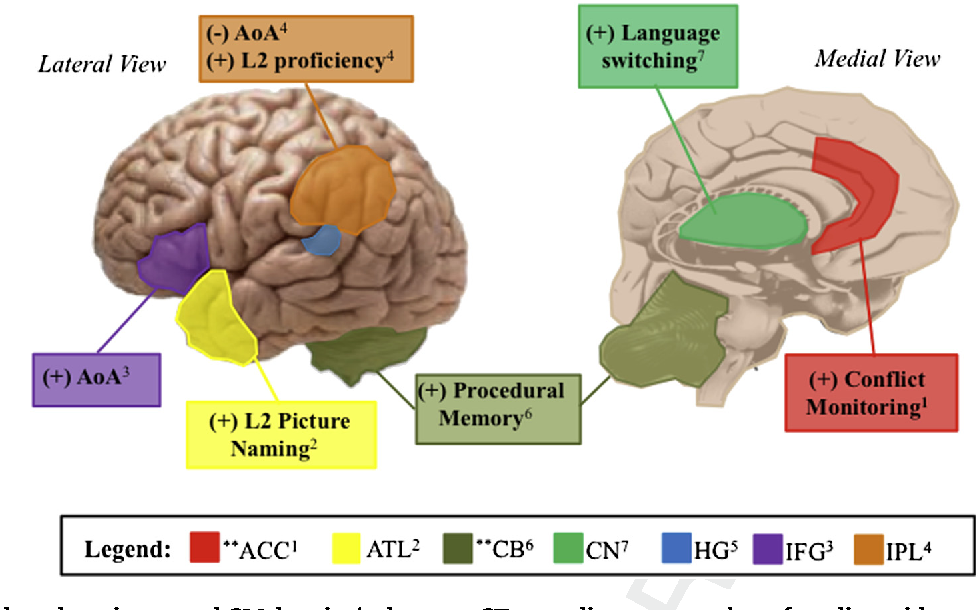Neuroplasticity as a function of second language learning ...