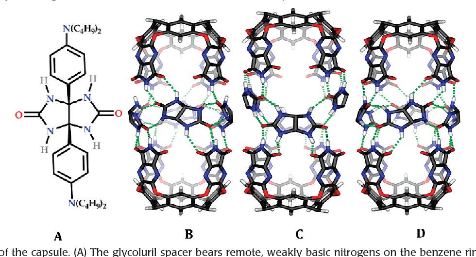 Hydrogen-bonded Capsules: Molecular Behavior in Small Spaces