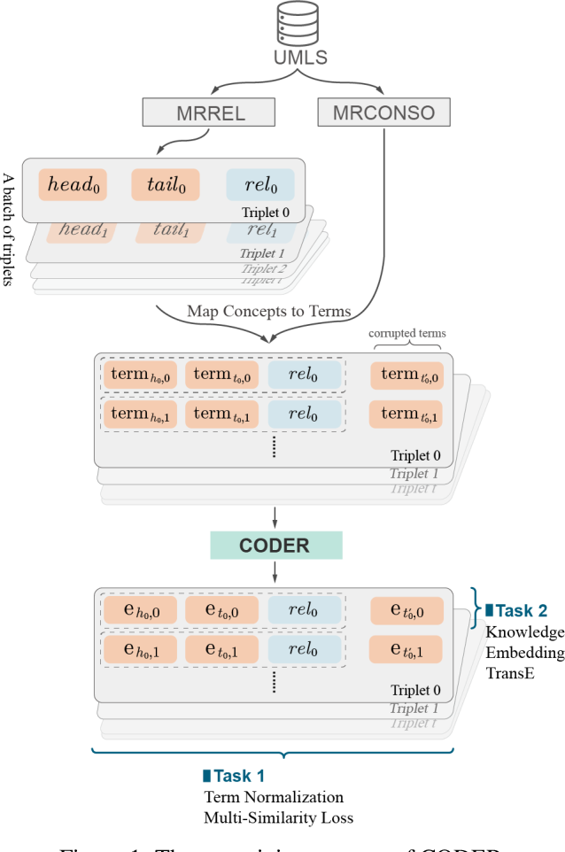 Figure 1 for CODER: Knowledge infused cross-lingual medical term embedding for term normalization