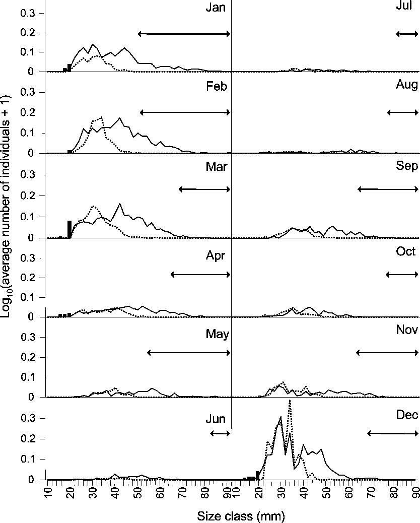 Figure 3. Monthly abundance (log [CPUE + 1]) by size class (mm LT) for transitional individuals (bars), females (solid line) and males (dashed line). Lines with arrows represent the difference in maximum sizes of males and females. CPUE was calculated as the average number of individuals per seine haul based on monthly sampling at 5 estuarine sites from August 1996 to March 2003.