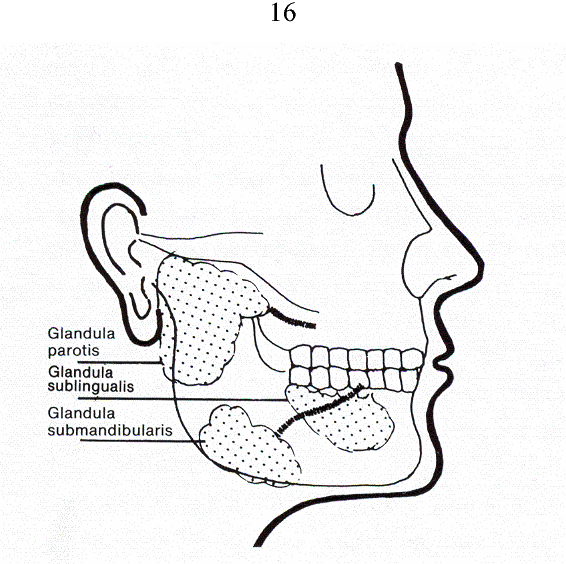 Imaging Of Salivary Glands And Assessment Of Autonomic Nervous