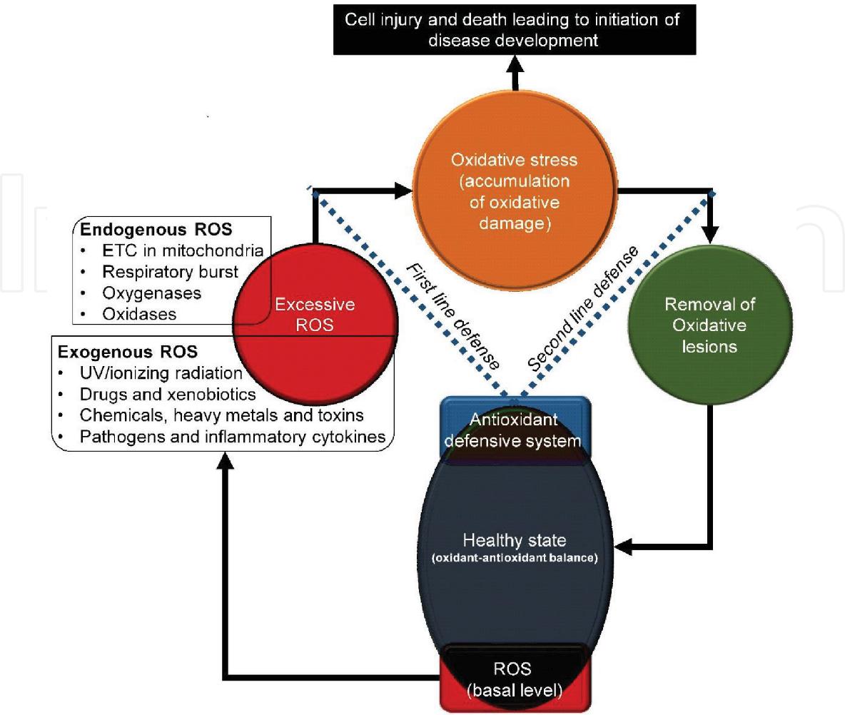 Figure 3 from Oxidative Stress in Urolithiasis - Semantic