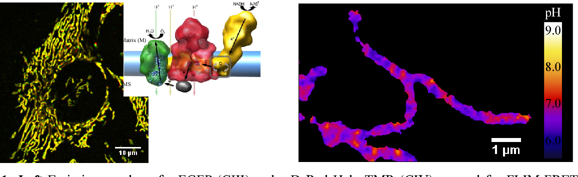 Figure 1 from 2  IRTG-Klausurtagung PHYSIOLOGY AND DYNAMICS