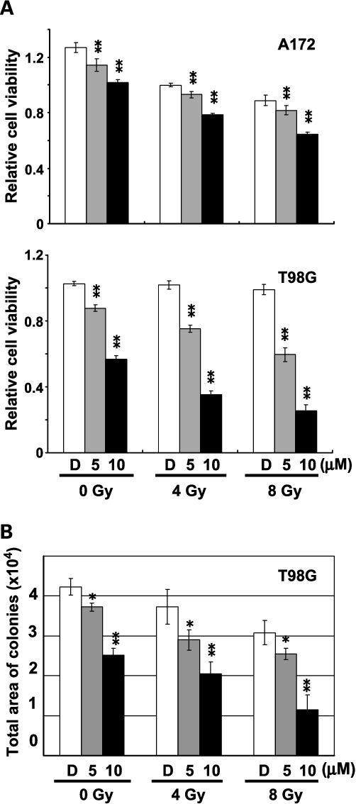 Fig. 5. The combined effect of ionizing radiation and low dose of GSK3h inhibitor (AR-A014418) against glioblastoma cells (A172 andT98G). A, the glioblastoma cells were seeded in 96-well culture plates and treated with either DMSO or a low dose (5 or10 Amol/L) of AR-A014418 for 24 h before irradiation at doses of 0, 4, or 8 Gy.The relative number of viable cells was measured byWST-8 assay at 120 h after irradiation.When compared with cells treated with DMSO (D), pretreatment with either 5 Amol/L (gray column) or10 Amol/L (closed column) AR-A014418 significantly enhanced the effect of irradiation against glioblastoma cells and particularly theT98G cells that harbor mutant p53 and are normally resistant to radiation (34). **,P < 0.01; Student's t test.B, the combined effect of the GSK3h inhibitor was tested forT98G by colony formation assay in triplicates. In each well of six-well plates, 2,000 ofT98G cells were seeded and treated sequentially with DMSO orAR-A014418 and with ionizing radiation as described above. A total area of colonies stained with 0.1% crystal violet in PBS in each well was recorded and measured as arbitrary pixel number (Yaxis) by theAnalytical Digital Photomicrography method provided byAdobe Photoshop software (Adobe Systems, Inc.). *, P < 0.05; **, P < 0.01; Student's t test.
