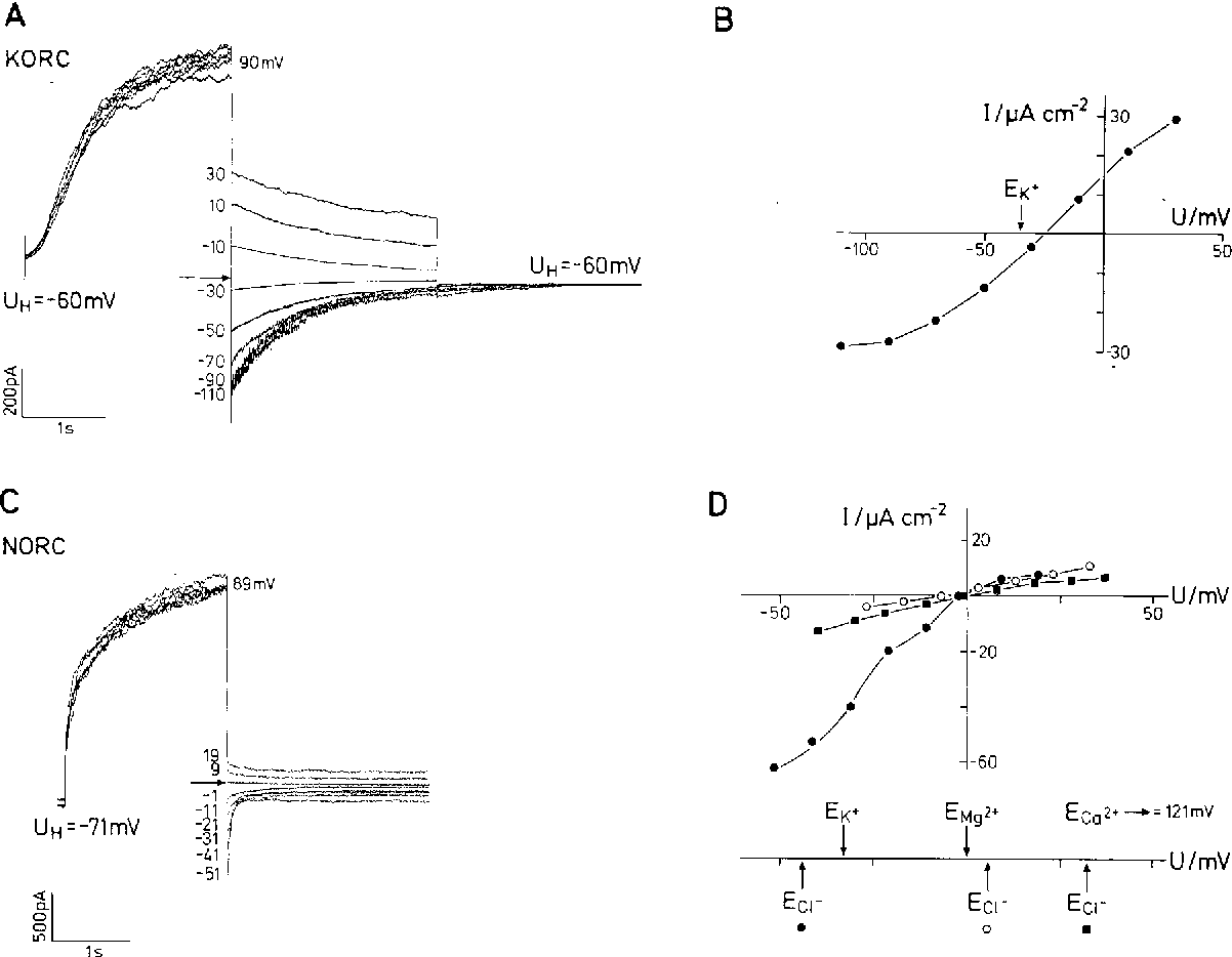 Figure 7 A Currents Through KORC Resulting From Tail Protocol With 20