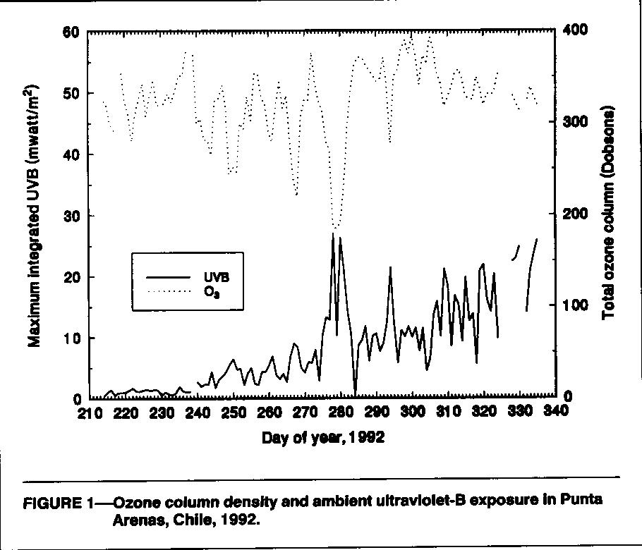 FIGURE 1-Ozone column density and ambient uftraviolet-B exposure In Punta Arenas, Chile, 1992.