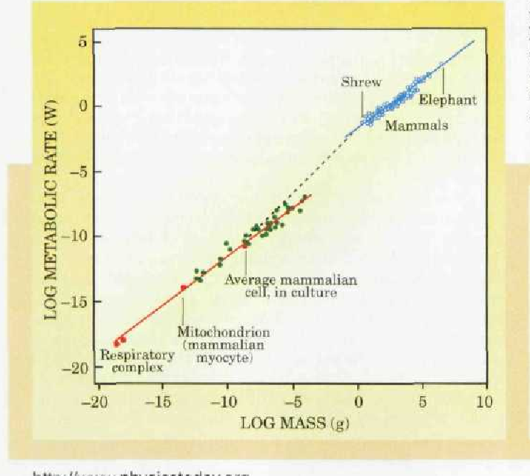 Figure 2 from Life's Universal Scaling Laws - Semantic Scholar
